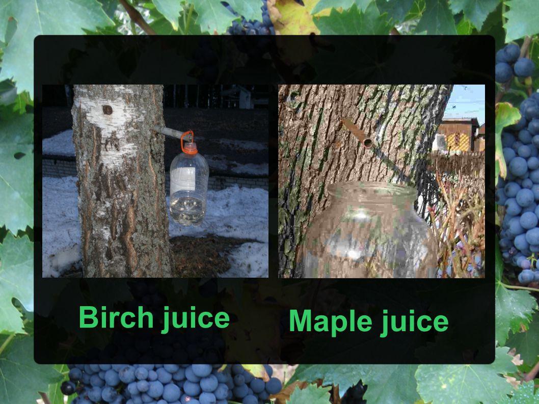 Birch juice Maple juice