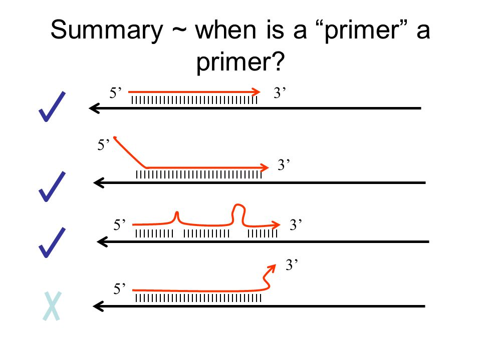 Summary ~ when is a primer a primer 5'3' 5' 3'