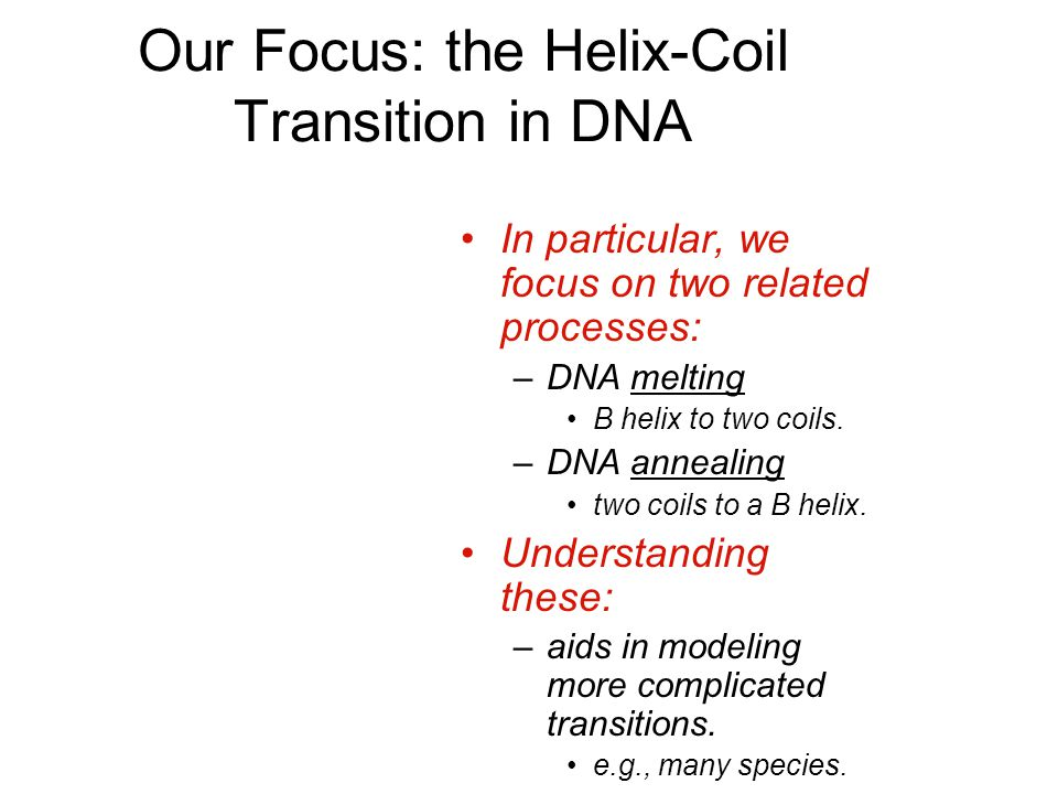 Our Focus: the Helix-Coil Transition in DNA In particular, we focus on two related processes: –DNA melting B helix to two coils.