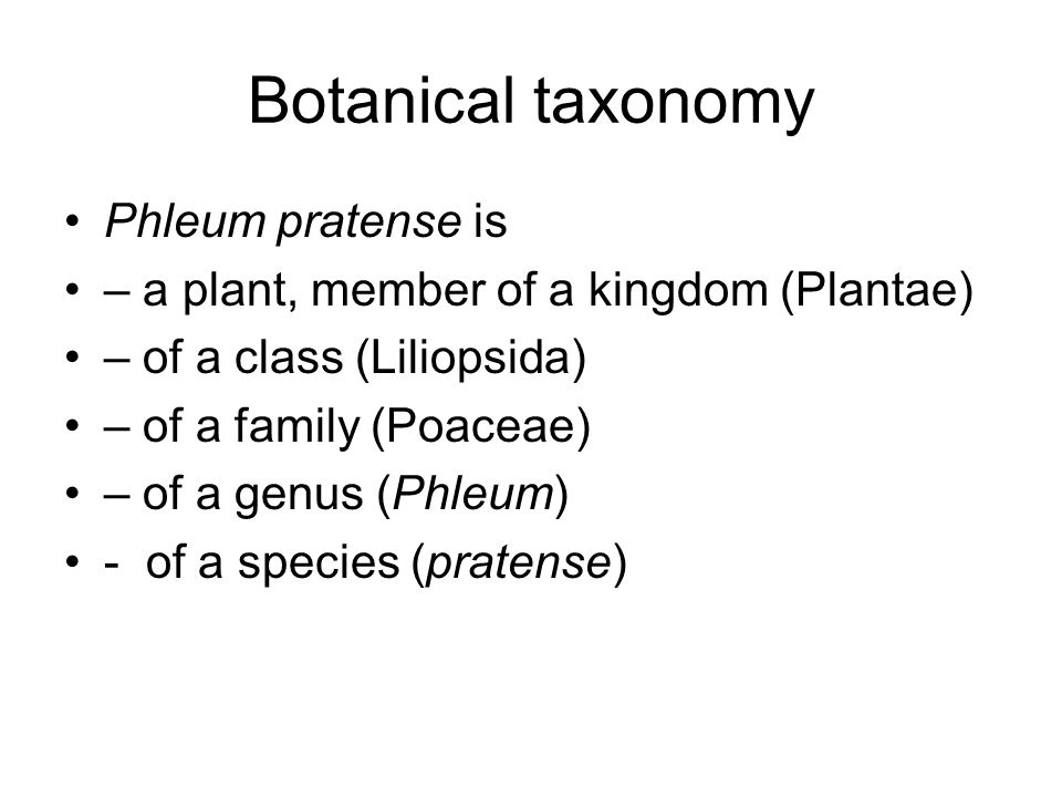 Botanical taxonomy Phleum pratense is – a plant, member of a kingdom (Plantae) – of a class (Liliopsida) – of a family (Poaceae) – of a genus (Phleum) - of a species (pratense)
