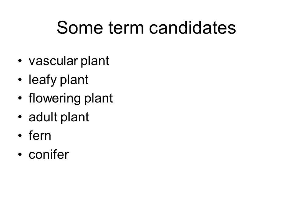 Some term candidates vascular plant leafy plant flowering plant adult plant fern conifer