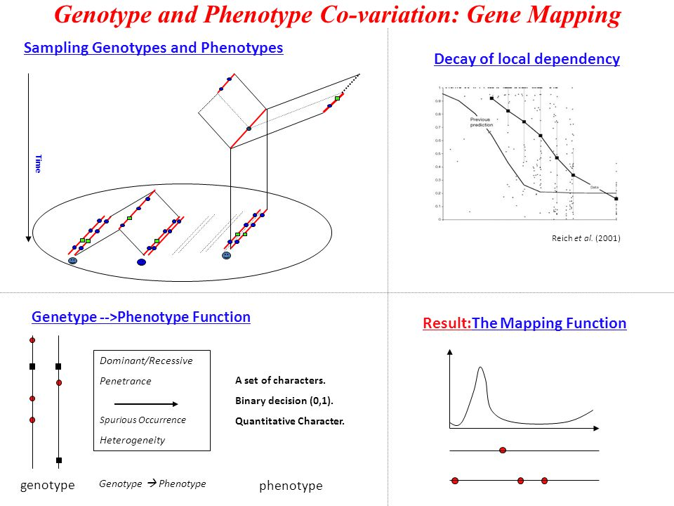 Genotype and Phenotype Co-variation: Gene Mapping Result:The Mapping Function Reich et al.