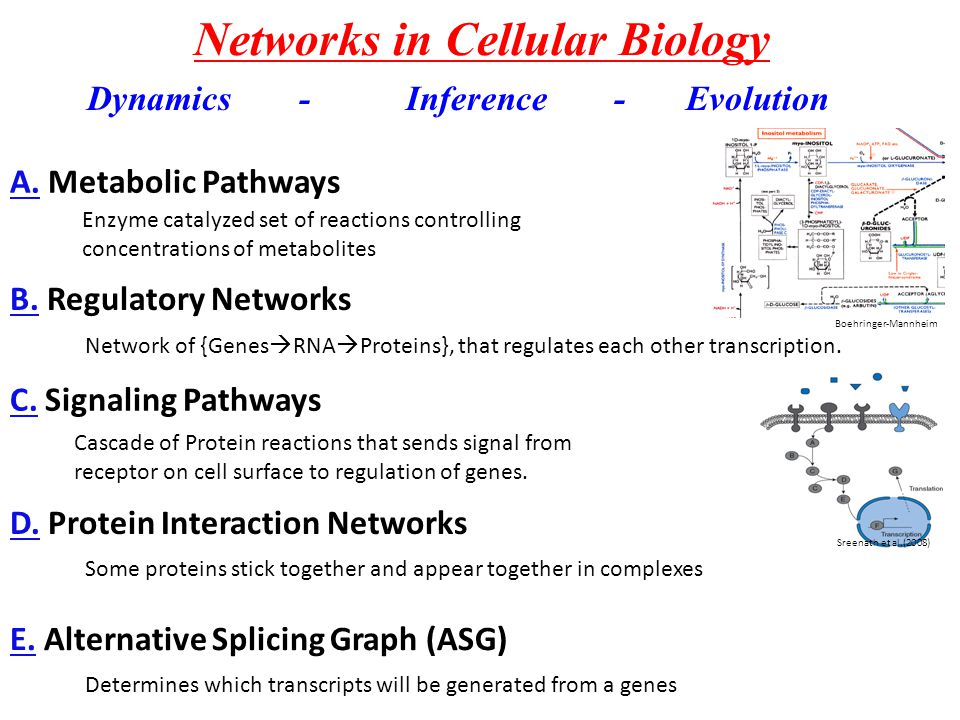 Networks in Cellular Biology A.