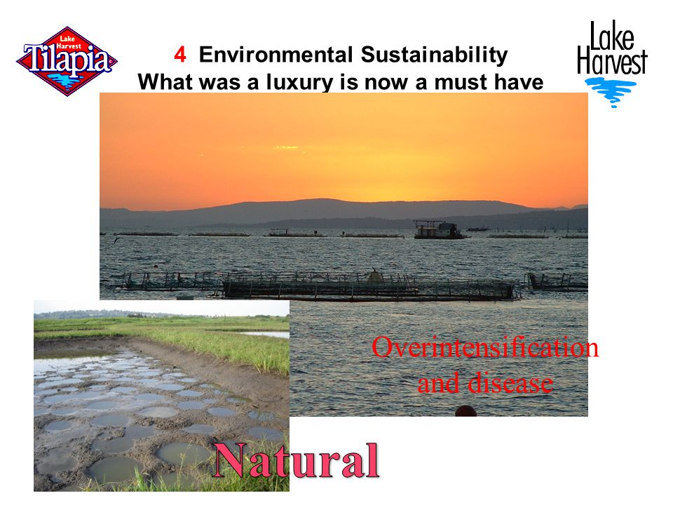 4 Environmental Sustainability What was a luxury is now a must have Overintensification and disease