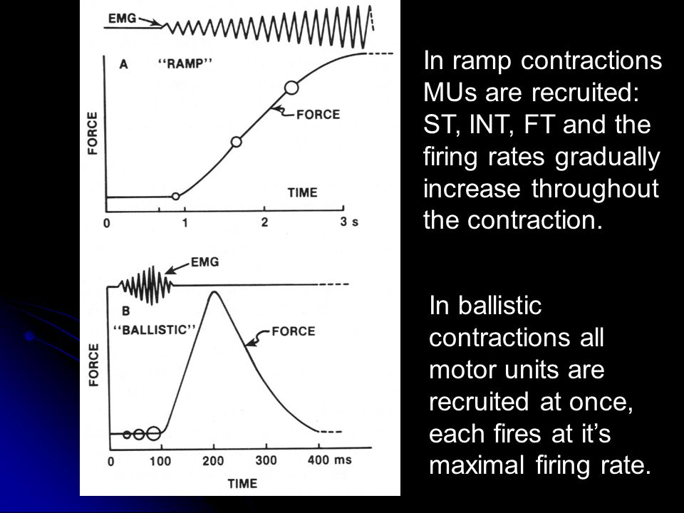 In ballistic contractions all motor units are recruited at once, each fires at it's maximal firing rate.