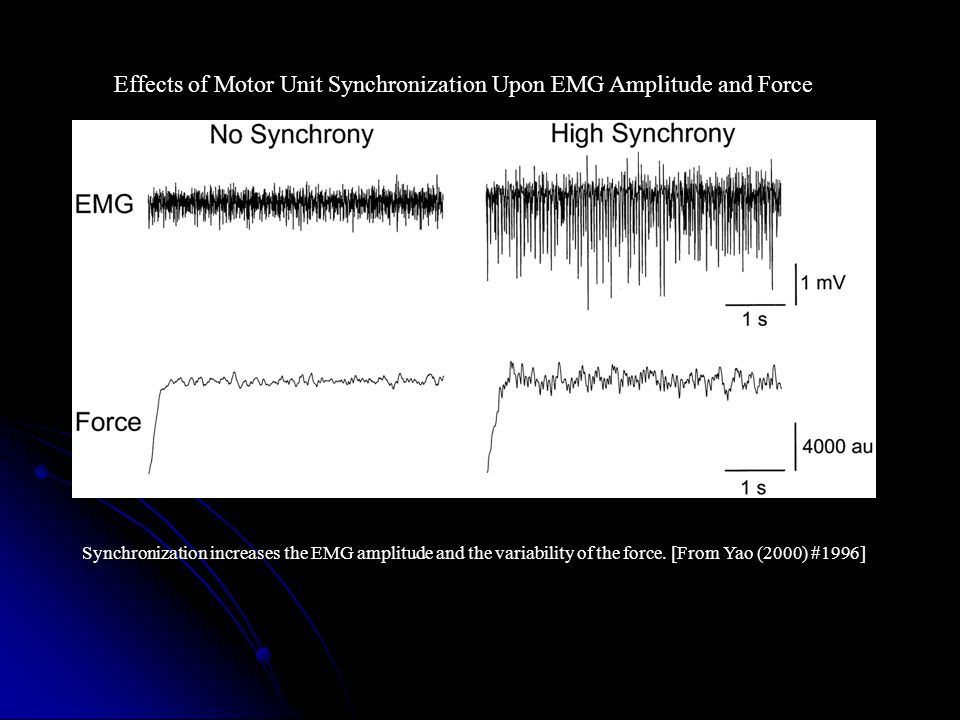 Effects of Motor Unit Synchronization Upon EMG Amplitude and Force Synchronization increases the EMG amplitude and the variability of the force.