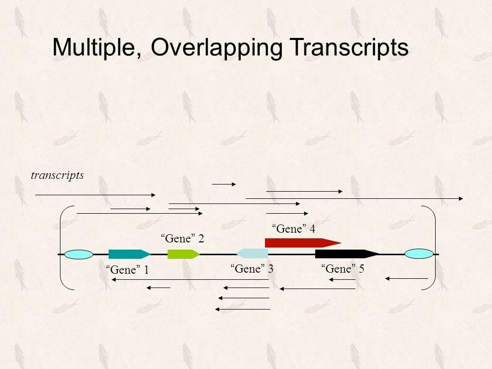 """"""" Gene """" 1 """" Gene """" 2 """" Gene """" 3 """" Gene """" 5 """" Gene """" 4 transcripts Multiple, Overlapping Transcripts"""