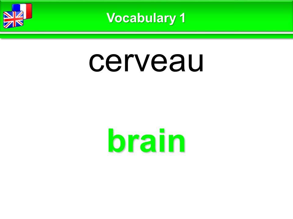 brain cerveau Vocabulary 1