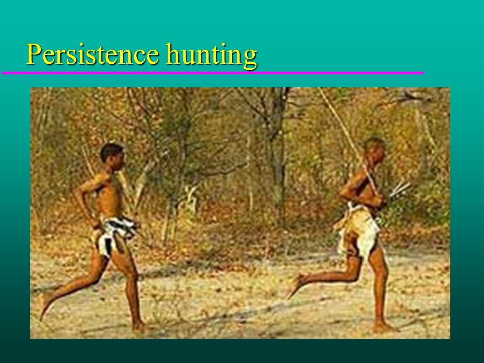 Persistence hunting