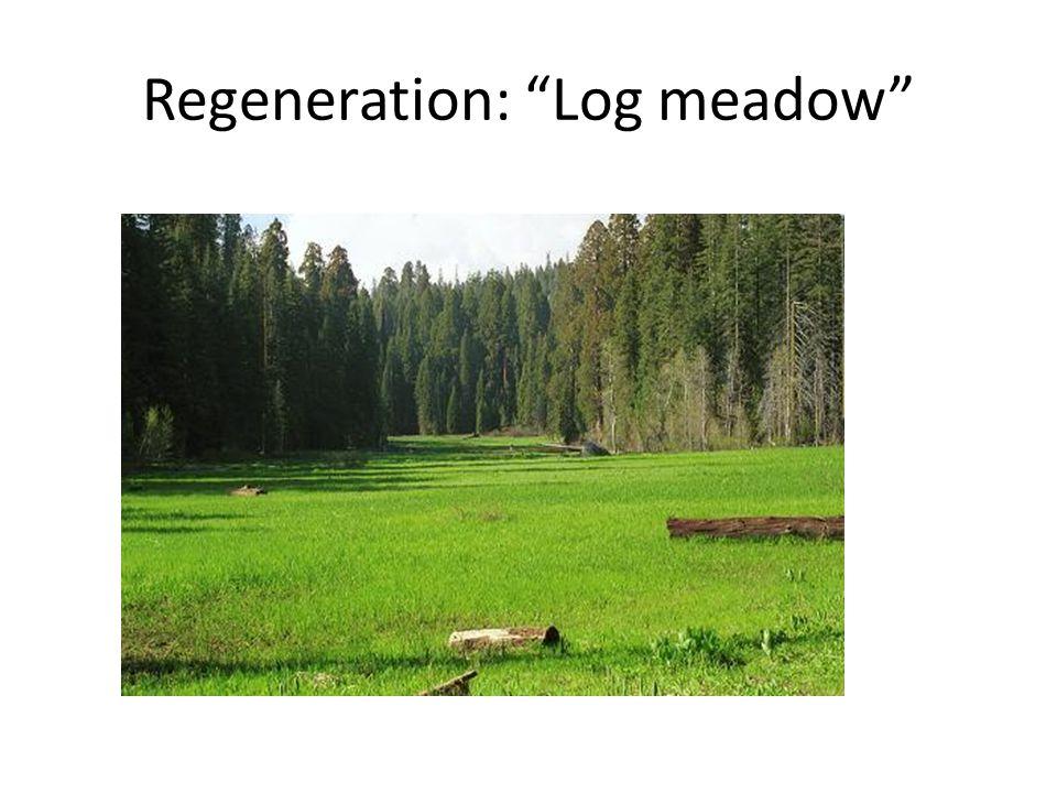"""Regeneration: """"Log meadow"""""""