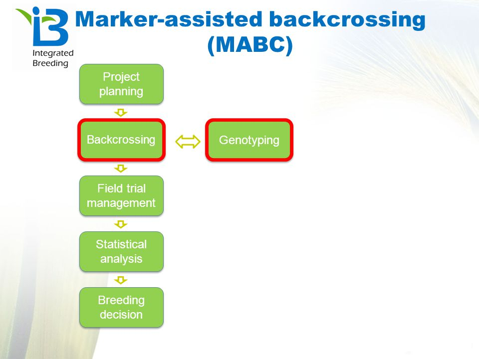 Marker-assisted recurrent selection (MARS) Project planning Population development Field trial management Phenotypic analysis Final breeding decision Genotyping QTL analysis QTL selection Recombination cycle