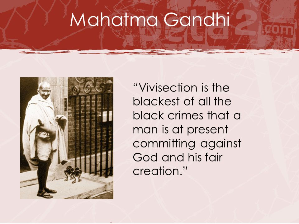 "page2.jpg Mahatma Gandhi ""Vivisection is the blackest of all the black crimes that a man is at present committing against God and his fair creation."""