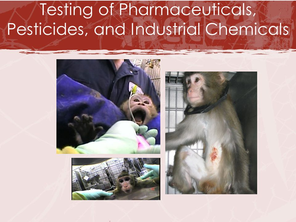 page2.jpg Testing of Pharmaceuticals, Pesticides, and Industrial Chemicals