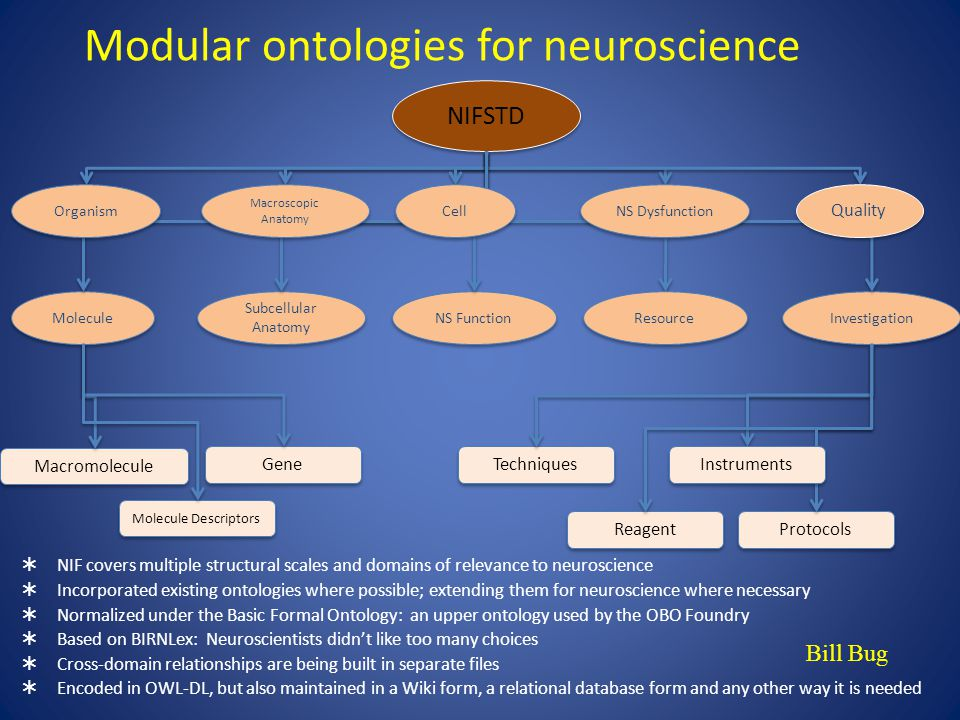Modular ontologies for neuroscience  NIF covers multiple structural scales and domains of relevance to neuroscience  Incorporated existing ontologies where possible; extending them for neuroscience where necessary  Normalized under the Basic Formal Ontology: an upper ontology used by the OBO Foundry  Based on BIRNLex: Neuroscientists didn't like too many choices  Cross-domain relationships are being built in separate files  Encoded in OWL-DL, but also maintained in a Wiki form, a relational database form and any other way it is needed NIFSTD NS Function Molecule Investigation Subcellular Anatomy Macromolecule Gene Molecule Descriptors Techniques Reagent Protocols Cell Instruments Bill Bug NS Dysfunction Quality Macroscopic Anatomy Macroscopic Anatomy Organism Resource