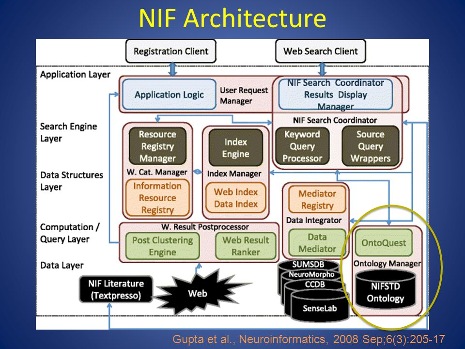 Summary NIF has tried to adopt a flexible, practical approach to assembling, extending and using community ontologies – We use a combination of search strategies: string based, lexicon-based, ontology-based – We believe in modularity – We believe in starting simple and adding complexity – We believe in single asserted hierarchies and multiple inferred hierarchies – We believe in balancing practicality and rigor NIF is working through the International Neuroinformatics Coordinating Facility (INCF) to engage the community to help build out the Neurolex and start adding additional relations – Neuron registry task force – Structural lexicon