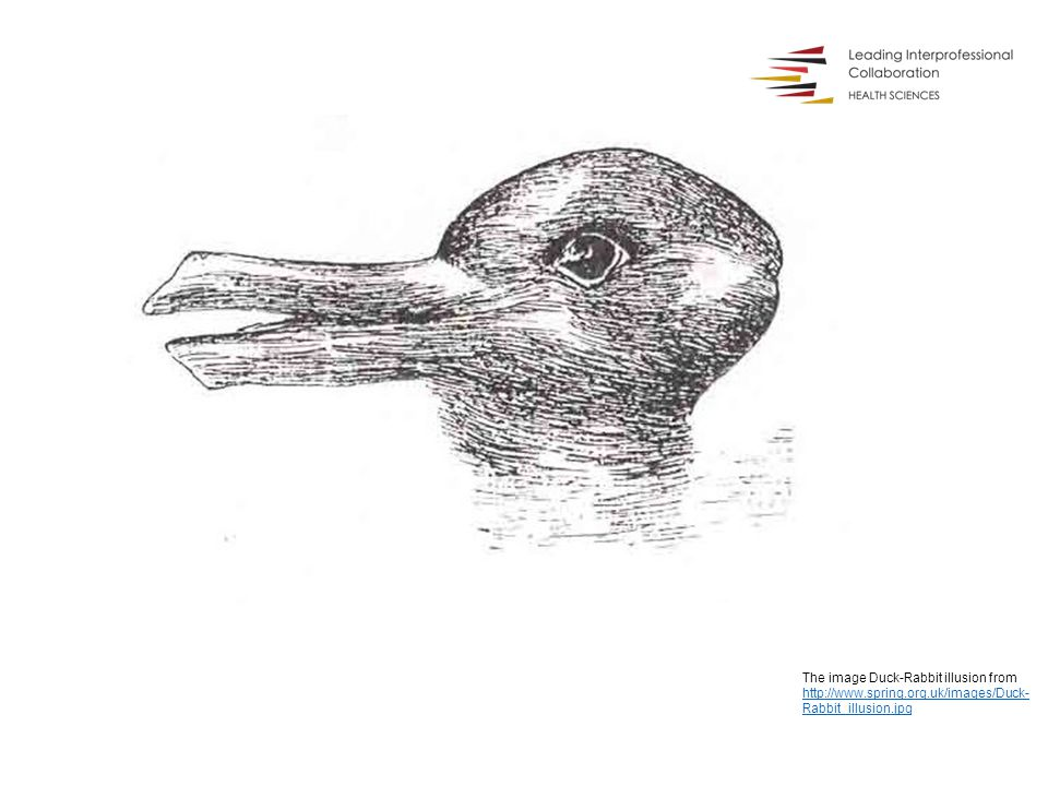 The image Duck-Rabbit illusion from http://www.spring.org.uk/images/Duck- Rabbit_illusion.jpg http://www.spring.org.uk/images/Duck- Rabbit_illusion.jpg