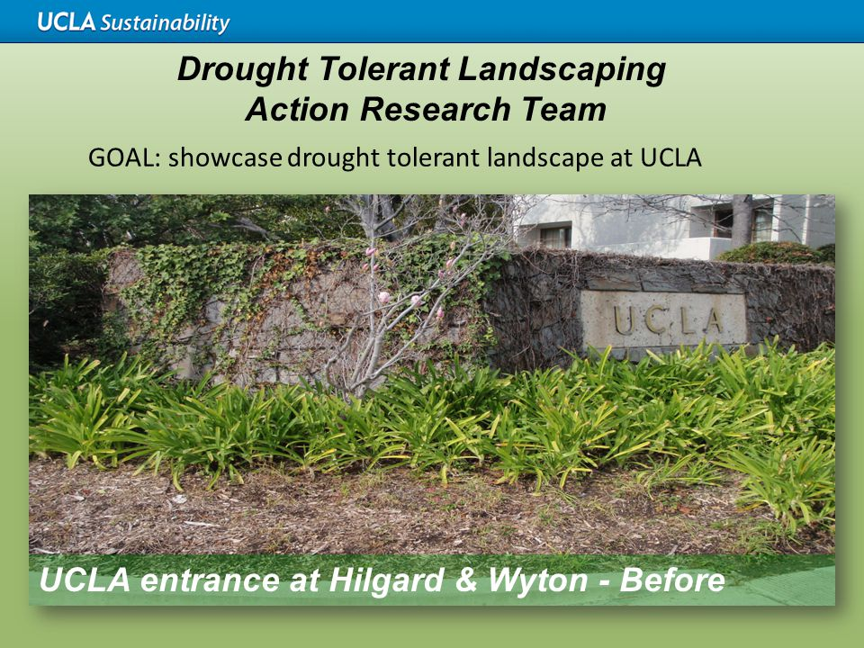 GOAL: showcase drought tolerant landscape at UCLA UCLA entrance at Hilgard & Wyton - Before Drought Tolerant Landscaping Action Research Team