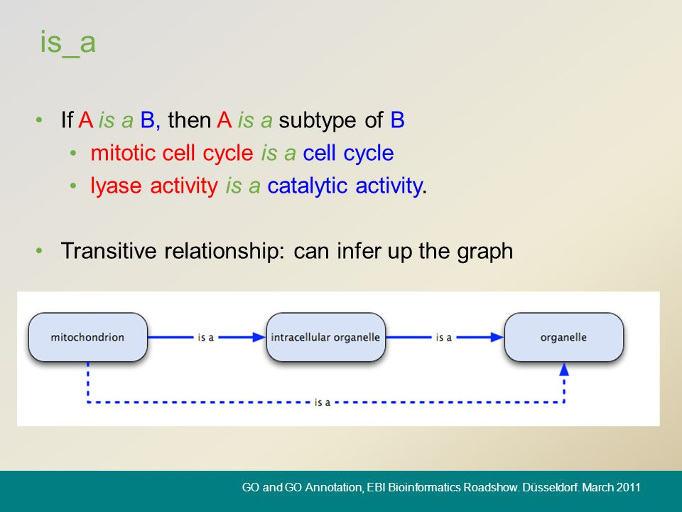 is_a If A is a B, then A is a subtype of B mitotic cell cycle is a cell cycle lyase activity is a catalytic activity. Transitive relationship: can inf