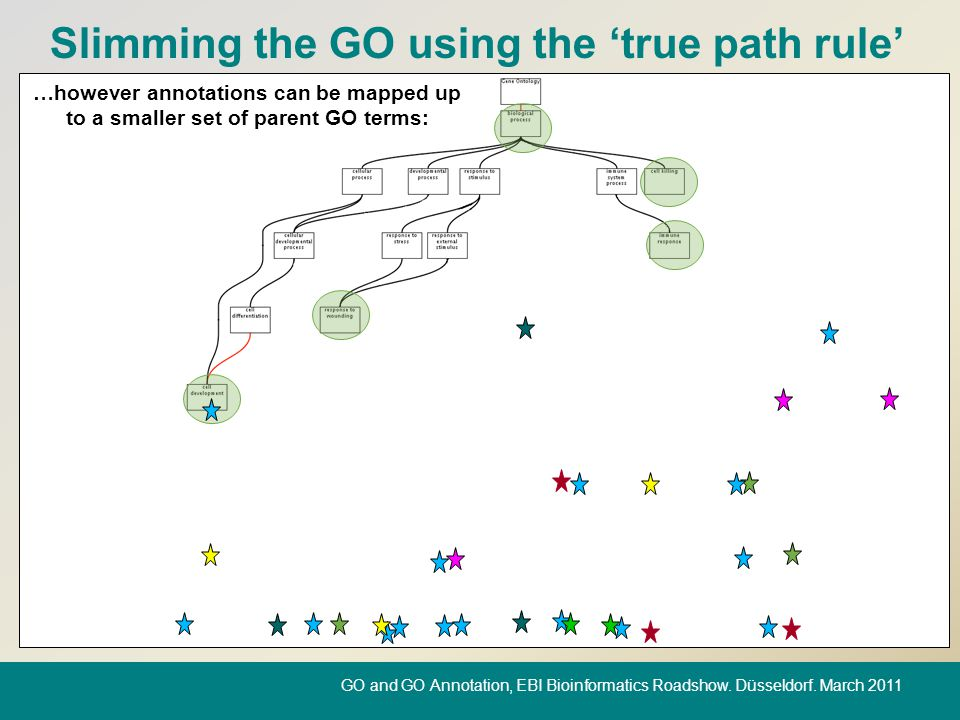 Slimming the GO using the 'true path rule' …however annotations can be mapped up to a smaller set of parent GO terms: GO and GO Annotation, EBI Bioinf