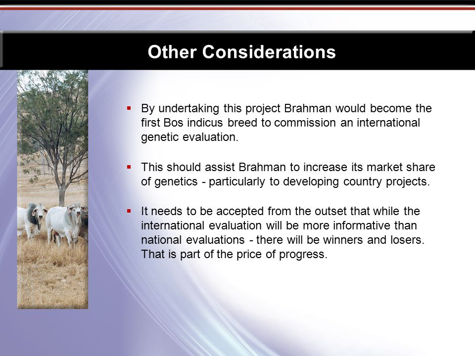  By undertaking this project Brahman would become the first Bos indicus breed to commission an international genetic evaluation.  This should assist