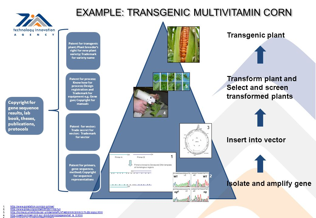 Transgenic plant Transform plant and Select and screen transformed plants Insert into vector Isolate and amplify gene Patent for transgenic plant; Pla