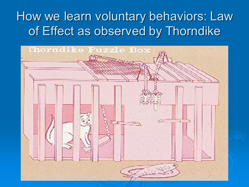 How we learn voluntary behaviors: Law of Effect as observed by Thorndike