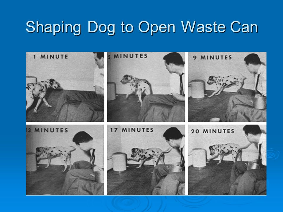 Shaping Dog to Open Waste Can