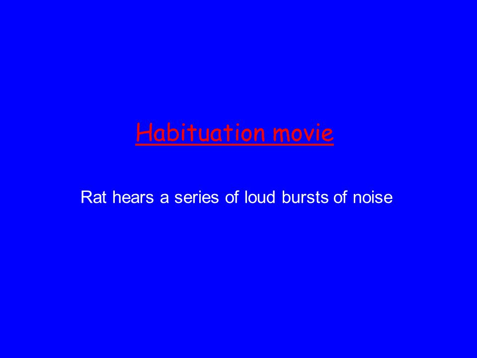 Habituation movie Rat hears a series of loud bursts of noise