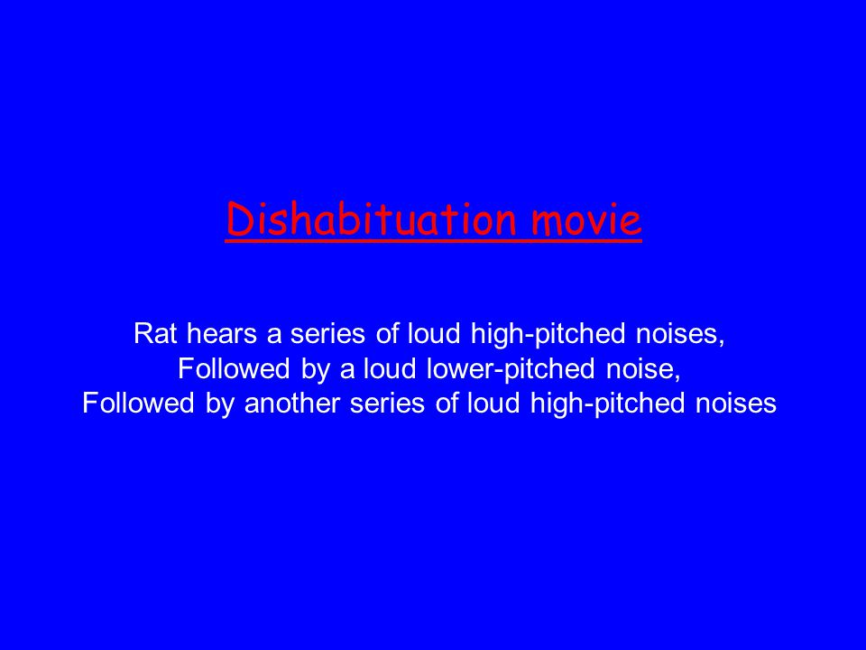 Dishabituation movie Rat hears a series of loud high-pitched noises, Followed by a loud lower-pitched noise, Followed by another series of loud high-pitched noises