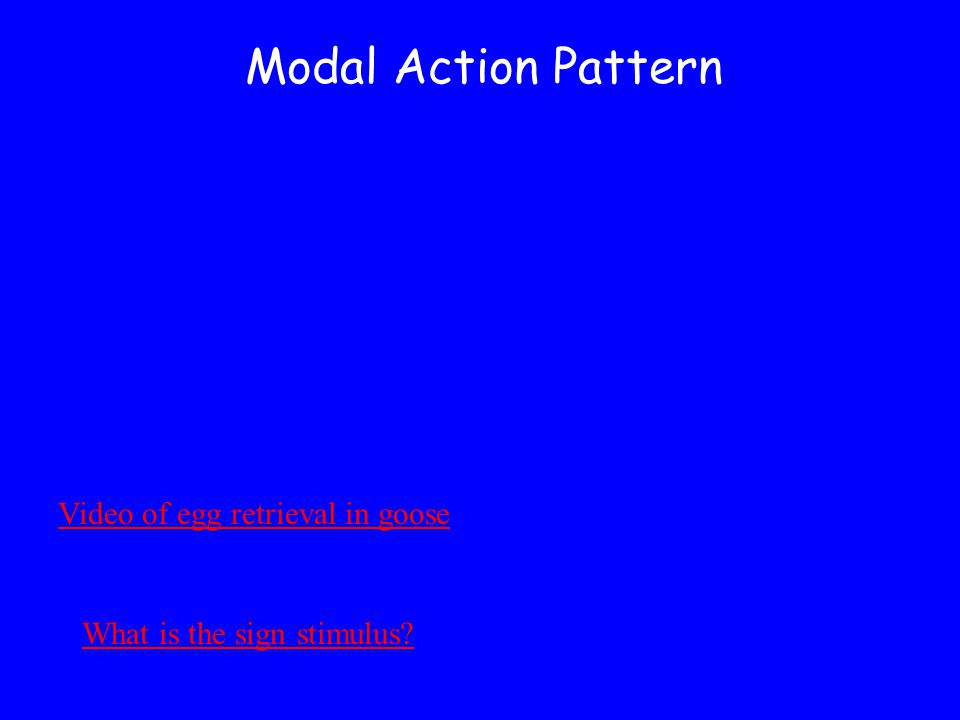 Modal Action Pattern Video of egg retrieval in goose What is the sign stimulus?