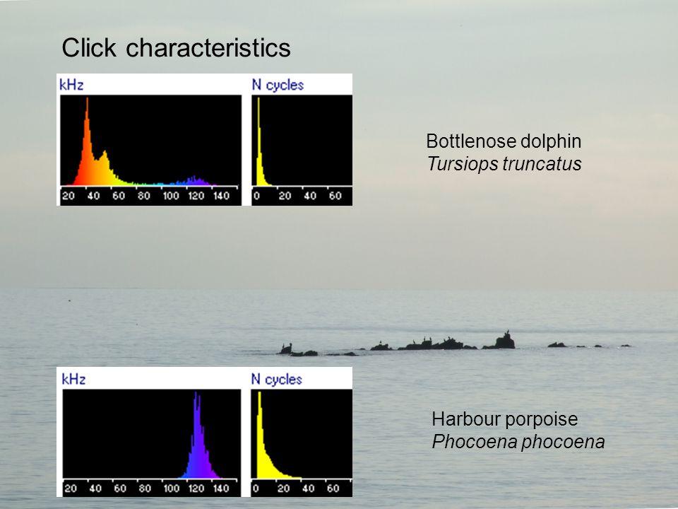 Bottlenose dolphin Tursiops truncatus Harbour porpoise Phocoena phocoena Click characteristics