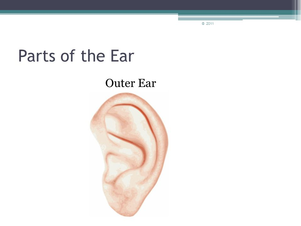 How do we hear? We use our ears to hear different sounds in the environment. © 2011