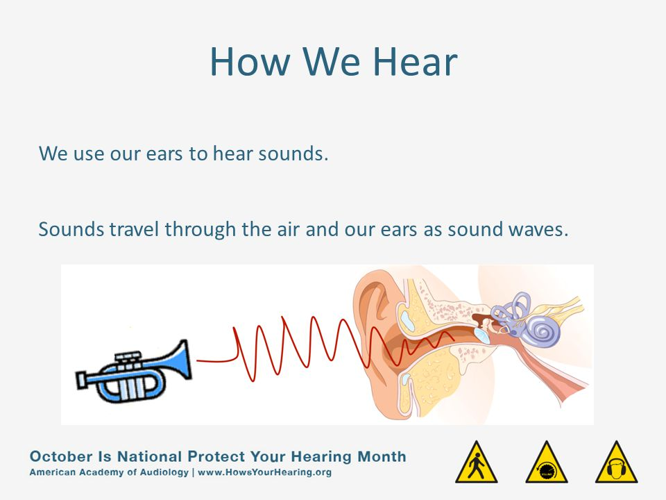 How We Hear Sound waves are collected by the outer part of the ear, called the pinna.