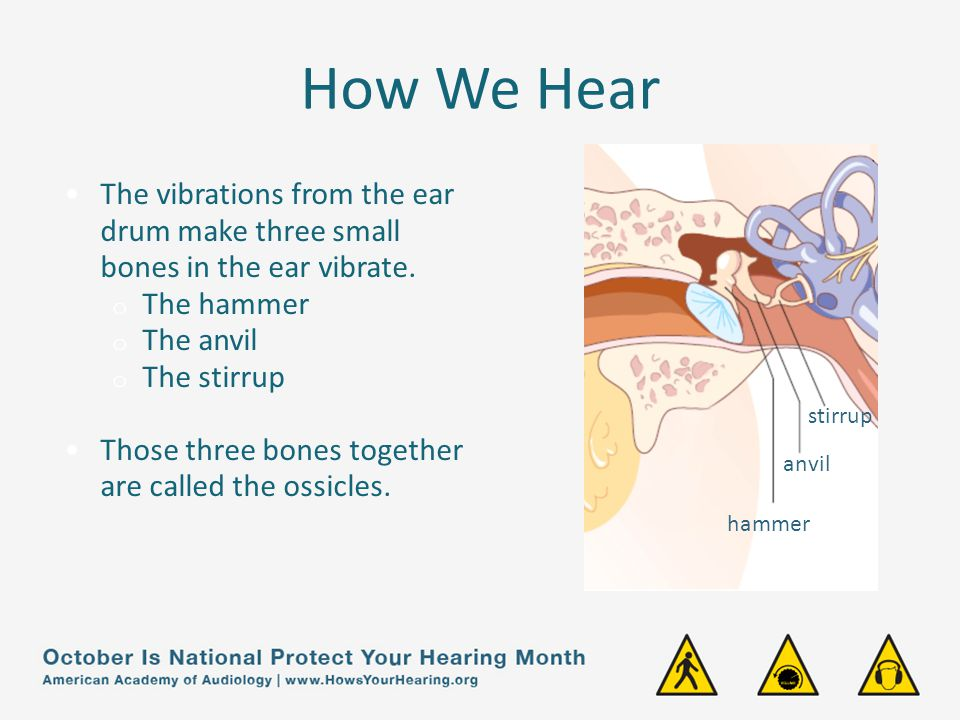 How We Hear The vibration of the ossicles transfer the sound waves to the inner ear.