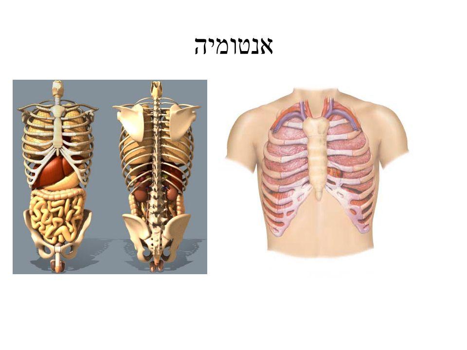 midsternal midclavicular Anterior axillary Posterior axillary midaxillary Anterior axillary Vertebral line Scapular line