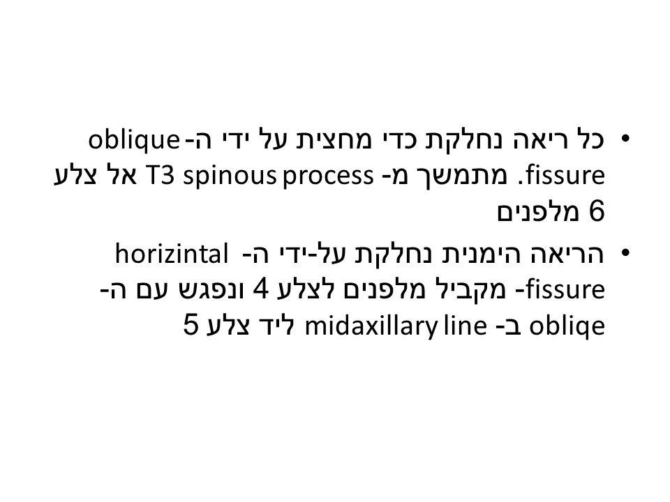 כל ריאה נחלקת כדי מחצית על ידי ה -oblique fissure.