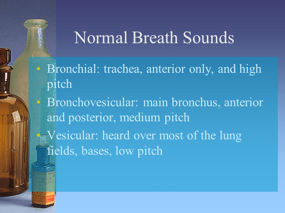 Normal Breath Sounds Bronchial: trachea, anterior only, and high pitch Bronchovesicular: main bronchus, anterior and posterior, medium pitch Vesicular: heard over most of the lung fields, bases, low pitch