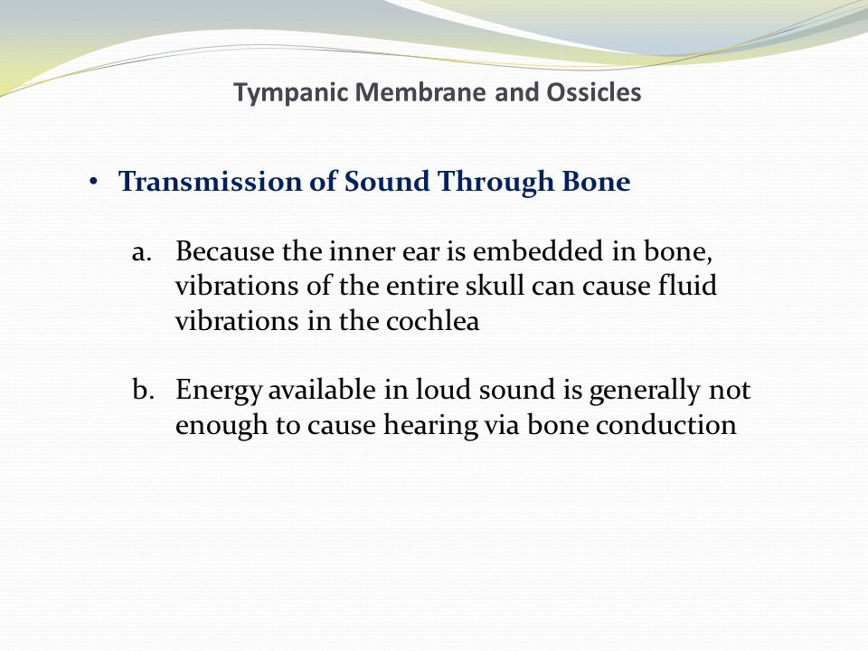 Tympanic Membrane and Ossicles Transmission of Sound Through Bone a.Because the inner ear is embedded in bone, vibrations of the entire skull can caus