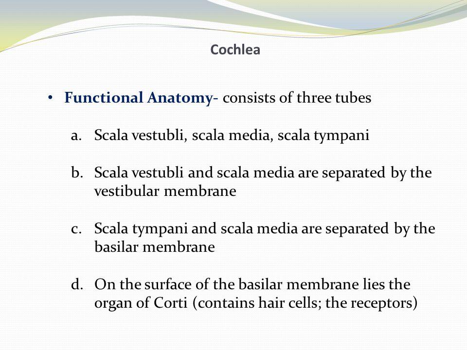 Cochlea Functional Anatomy Fig.