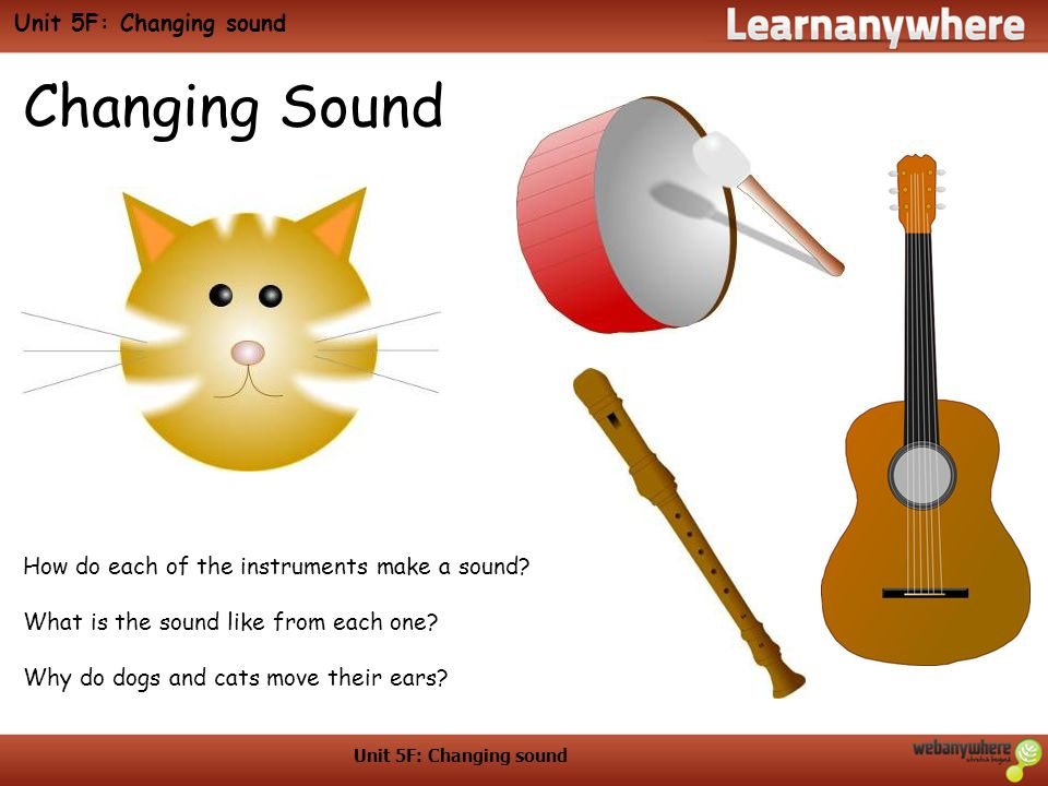 Changing Sound How do each of the instruments make a sound? What is the sound like from each one? Why do dogs and cats move their ears?