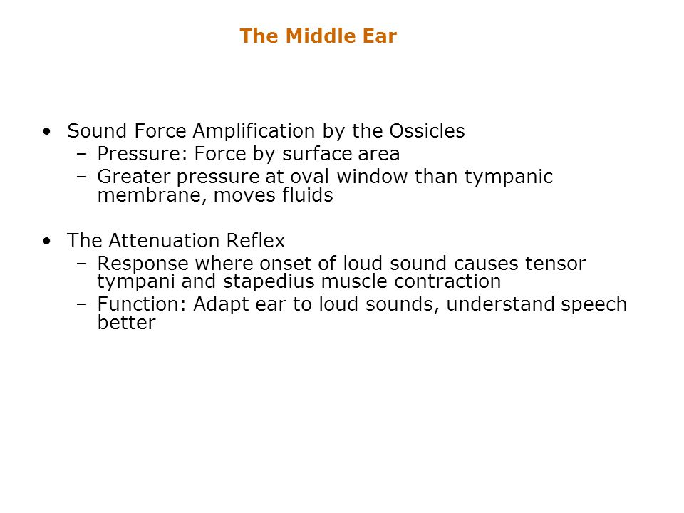 Sound Force Amplification by the Ossicles –Pressure: Force by surface area –Greater pressure at oval window than tympanic membrane, moves fluids The A