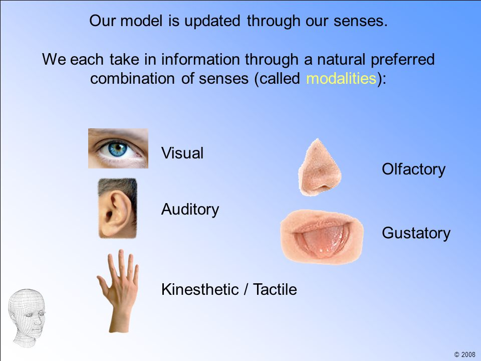 © 2008 Our model is updated through our senses.