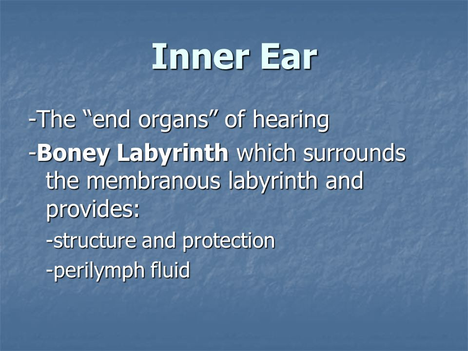 Inner Ear -The end organs of hearing -Boney Labyrinth which surrounds the membranous labyrinth and provides: -structure and protection -perilymph fluid