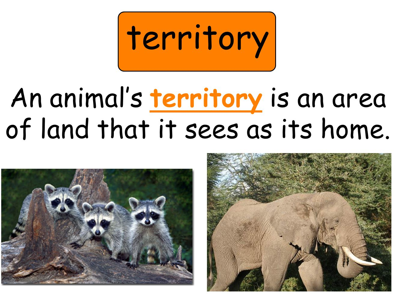 territory An animal's territory is an area of land that it sees as its home.