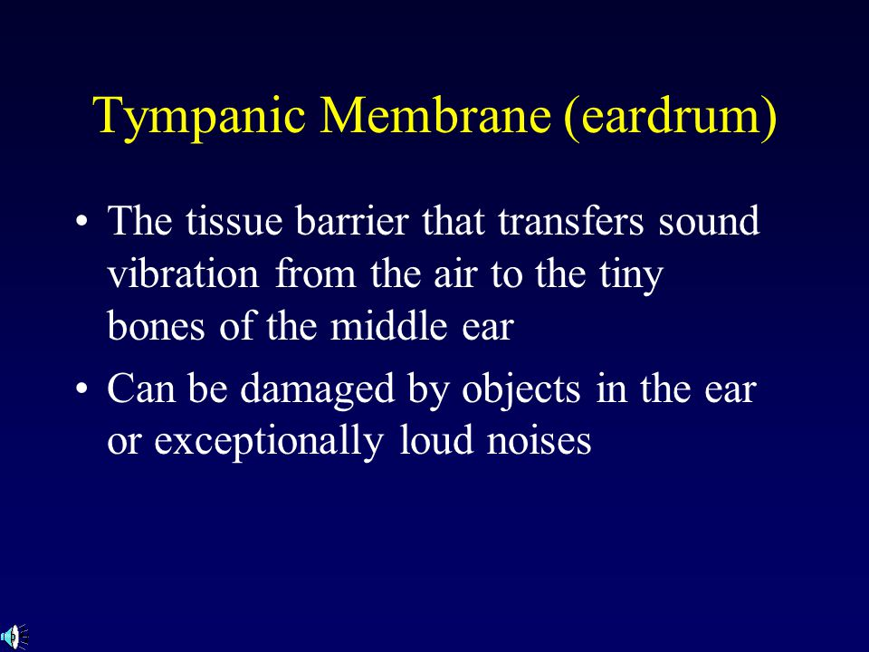 Tympanic Membrane (eardrum) The tissue barrier that transfers sound vibration from the air to the tiny bones of the middle ear Can be damaged by objects in the ear or exceptionally loud noises