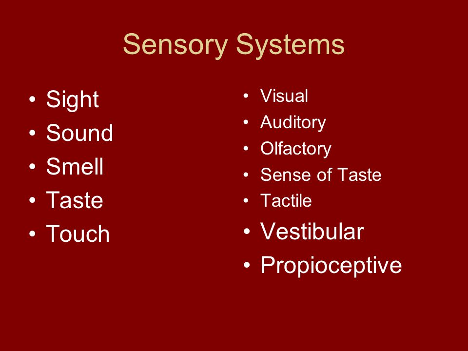 Sensory Systems Sight Sound Smell Taste Touch Visual Auditory Olfactory Sense of Taste Tactile Vestibular Propioceptive
