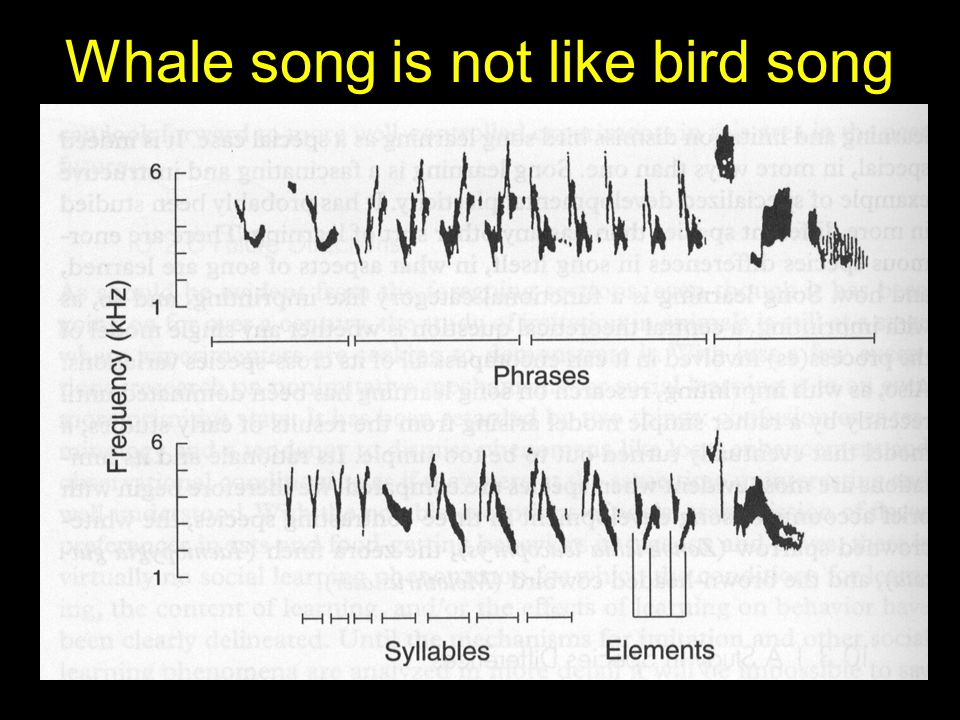 Whale song is not like bird song