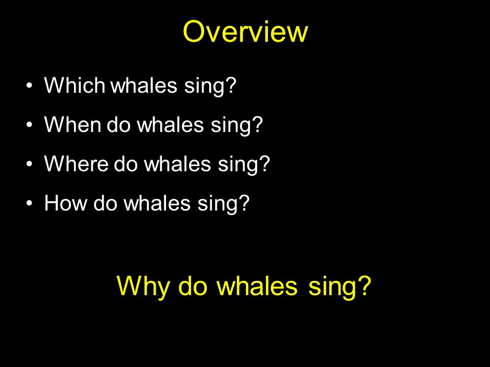 Whale songs are like acoustic carousels