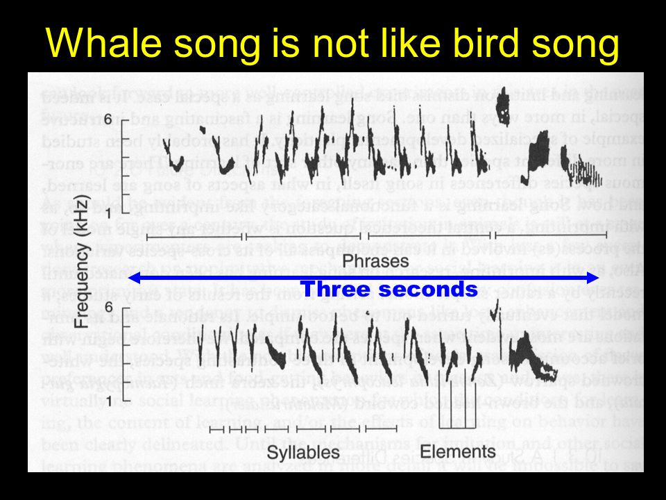 Whale song is not like bird song Three seconds
