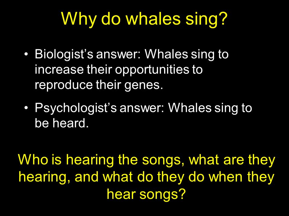 Biologist's answer: Whales sing to increase their opportunities to reproduce their genes.